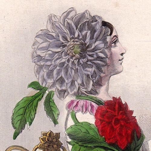 Gravure-XIXe-Dahlia-Fleur-Flower-Jean-Jacques-Grandville-Dahlien-1847