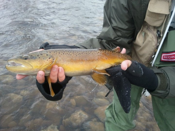 1000 images about trout fishing on pinterest green for Weber river fishing