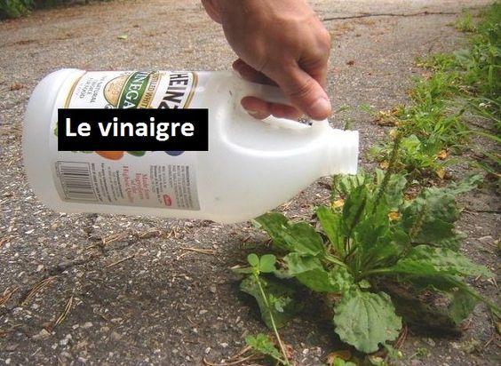 Des utilisations incroyables du vinaigre dans le jardin! Le vinaigre comme jamais vu…
