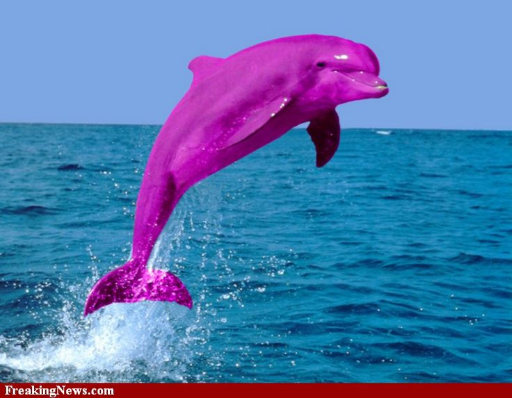 pink dolphin | Pink Dolphin funny how fake it looks