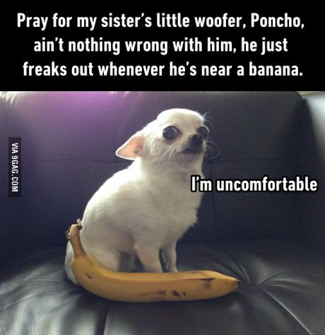 Banana for scale!