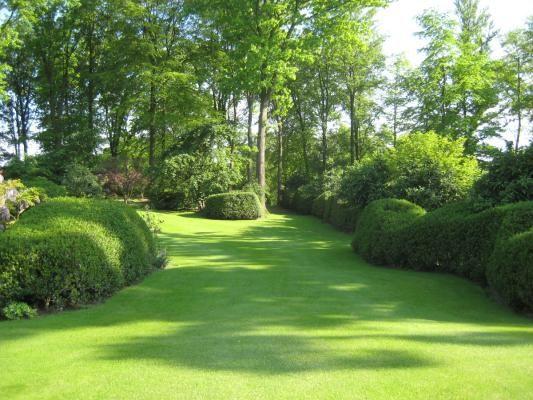 Beautiful grassy yard with mature shrubbery