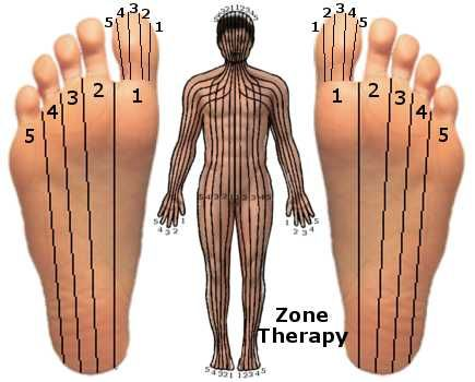 Zone Therapy - You know, the modern Reflexology is the evolution of Zone Therapies developed by an American Doctor. Are you interested to relieve pain simply using clothes pegs or elastic bands? Read on to learn, how Zone Therapy relief various pains?Birth of new healing technic! Zone therapyAn American Dr. William Fitzgerald developed Zone therapy and he is one of the fathers' of modern reflexology. He researched on the pain relief and found pressure applied at one part produced an…