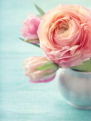 Rosas. Suavidad con un aroma inconfundible <3 ¿Sabías que las flores pueden ser ideales para un baby shower temático lleno de amor?  Mira aquí: http://www.escuelahuggies.com/DecoracionDelLugar/Baby-Shower-tematico-Corazones-y-amor-.aspx