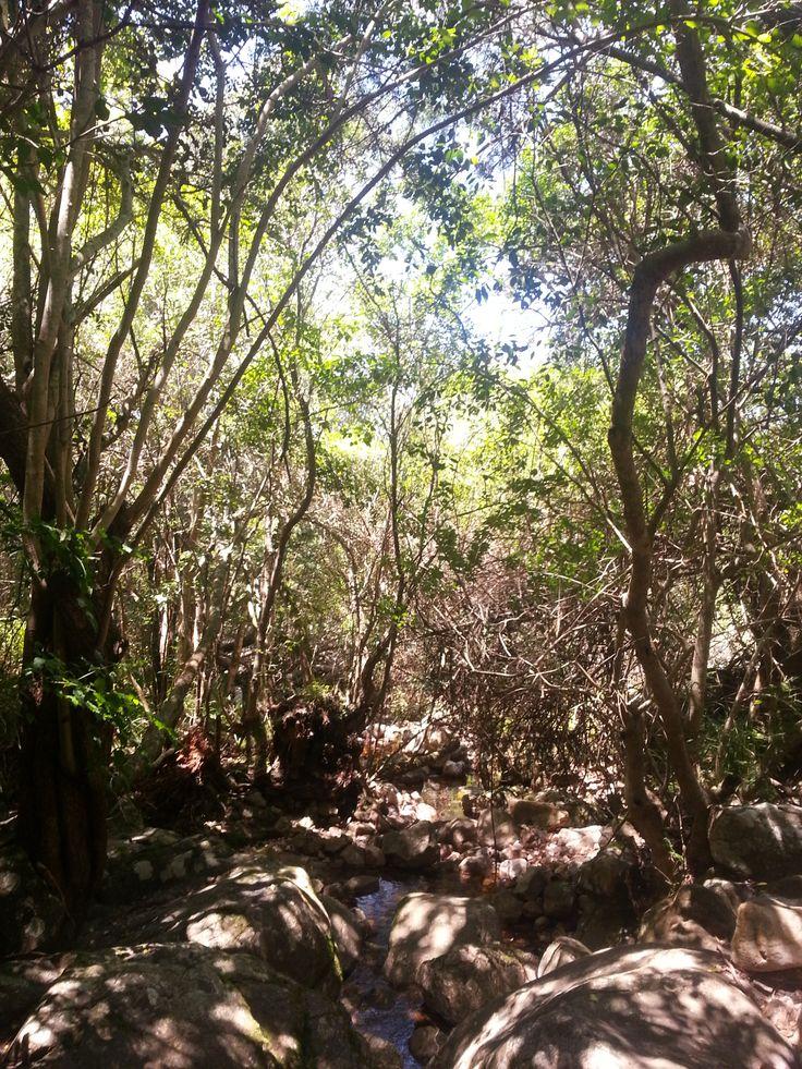 Kirstenbosch walk streambed