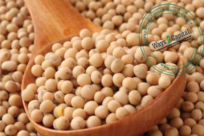 Soybean futures corrected and fell on Tuesday due to profit booking by the Market participants and tracking international prices.