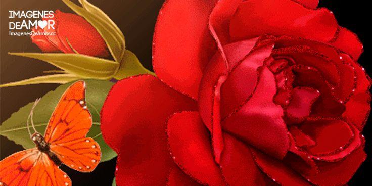 Si hay imágenes lindas en el mundo, esas son las imágenes derosas gif. De por sí las flores son sumamente bellas, las rosas tienen un encanto en particular que las hace hermosas, mucho más si
