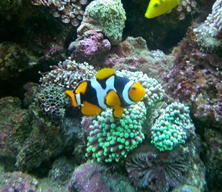 A1 Aquarium World is undoubtedly the best place to get your desired fish products at an affordable rate at http://bit.ly/1tjLFcF