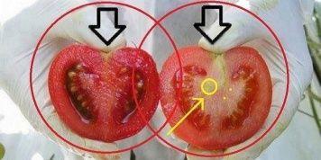 ¡Estamos comiendo veneno! Cómo identificar organismos modificados genéticamente en sólo dos pasos…