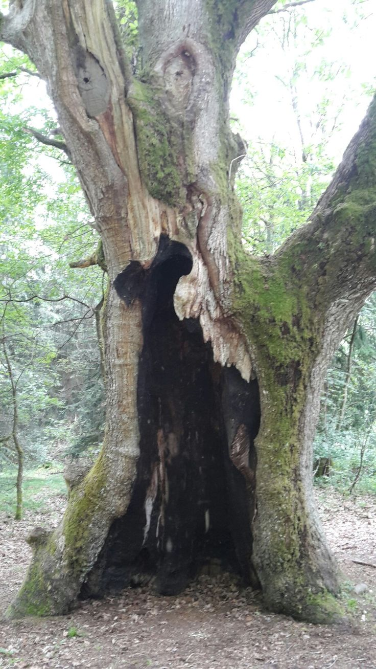31 besten ideen Bilder auf Pinterest | Drahtbäume, Drahtbaum ...