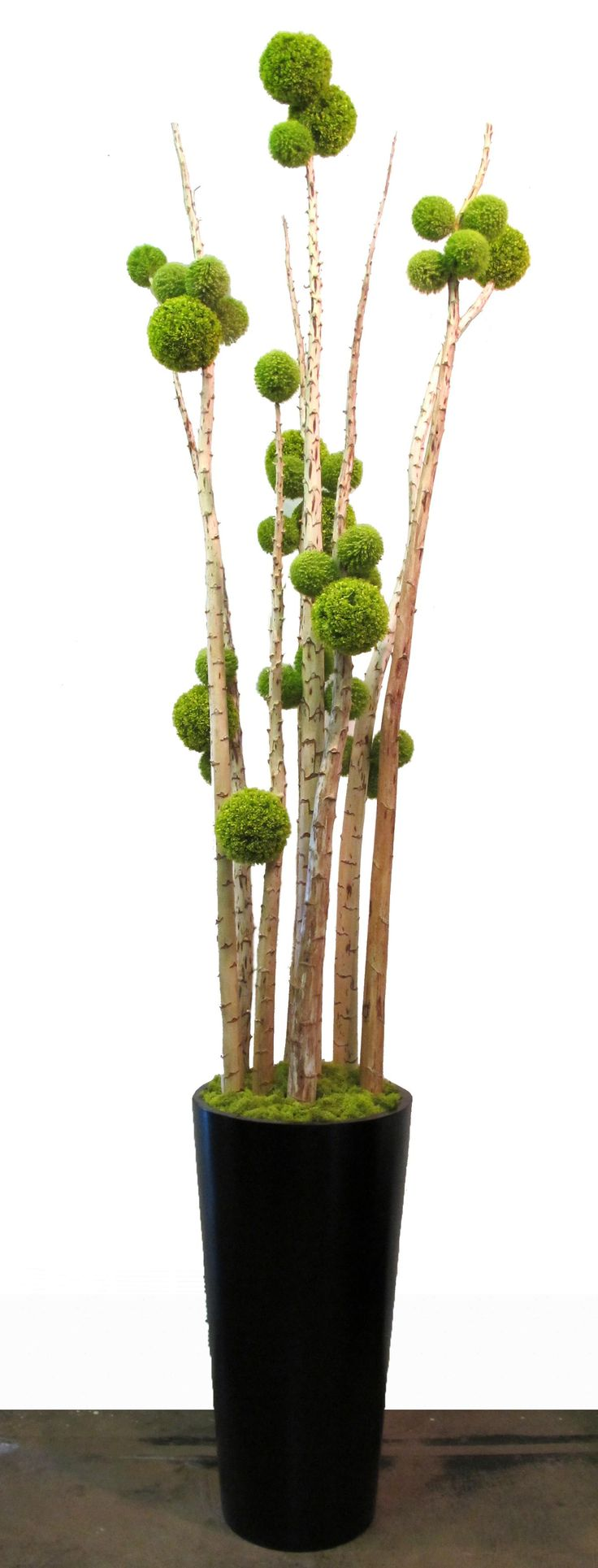 """FL1545  Green Allium Sphere on Yucca Poles in Black Fiberglass Tapered Round Container with Chartruese Reindeer Moss 123""""H x 30"""" Dia  $3245 ..."""
