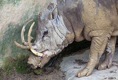 Welk dier heeft de langste tanden?   Wetenschap in Beeld