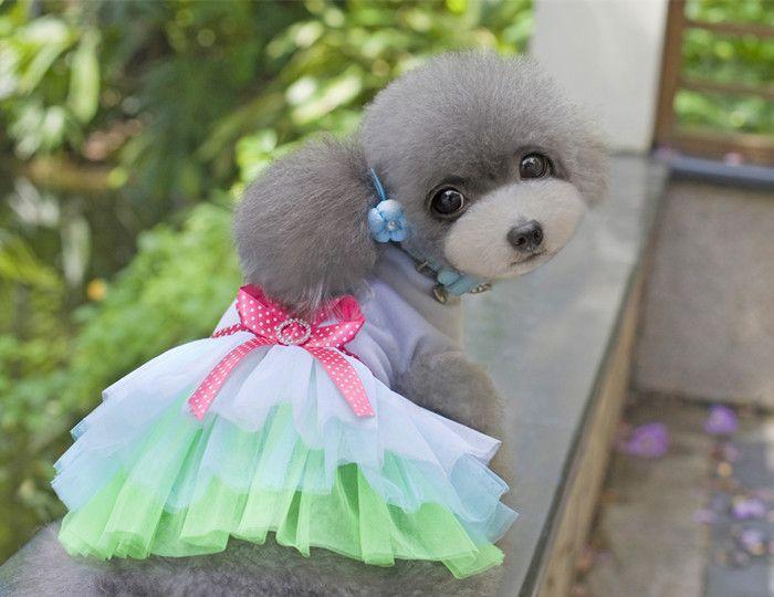 10 пс собака одежда платье для чихуахуа домашнее животное продукты компактный милый собака одежда XS размер одежда для щенков