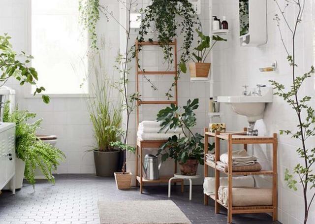 Les plantes d'intérieur peuvent embellir considérablement une salle de bains