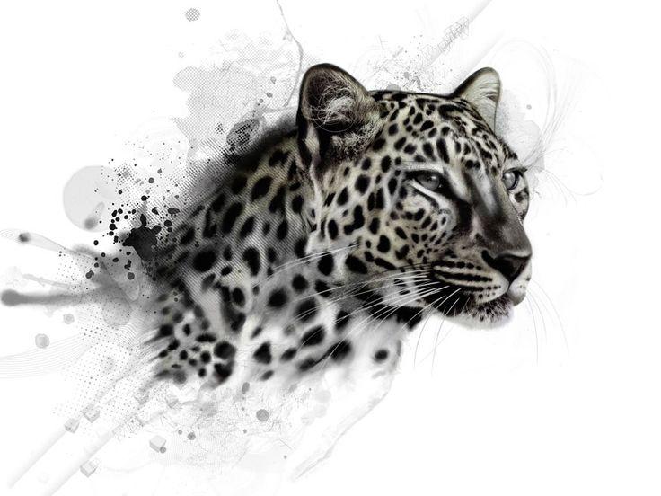 48 besten applikationen leopard bilder auf pinterest