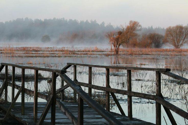 Rozlewiska rzeki Narwi w okolicy Odrynek