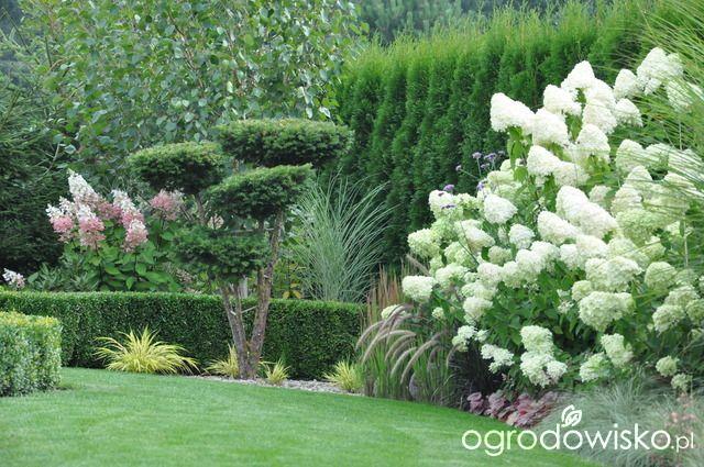 Wizytówka - Any ogrod mały czyli wygrana walka z ugorem - Forum ogrodnicze - Ogrodowisko