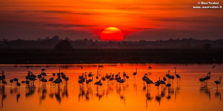 SUNSET AND FLAMINGOS by Max Venturi