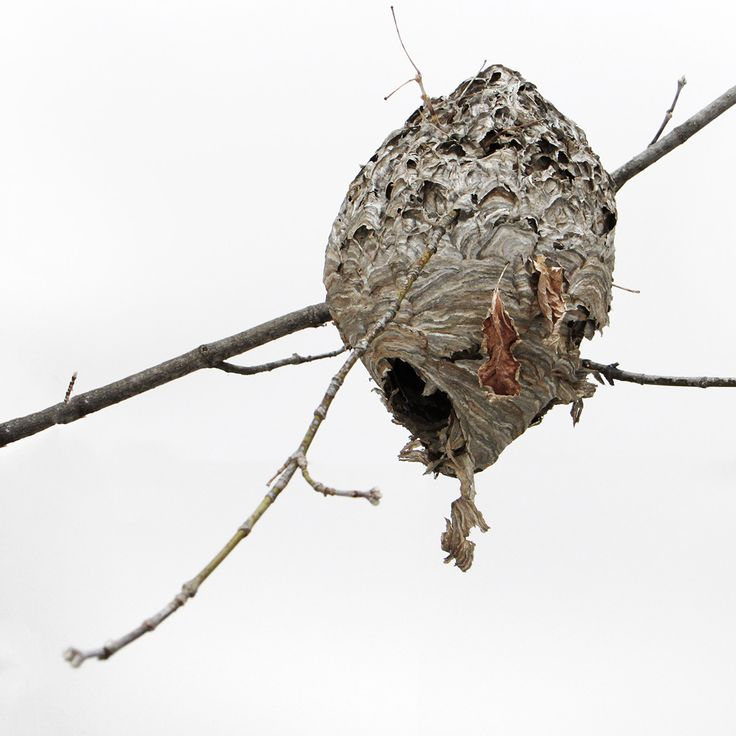 how to get rid of wasp nest in spring