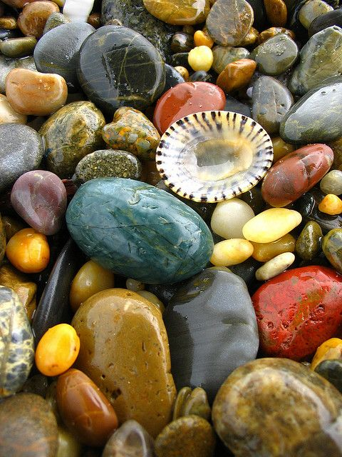 A selection of rocks, pebbles and shells. The variety of colours work well together.