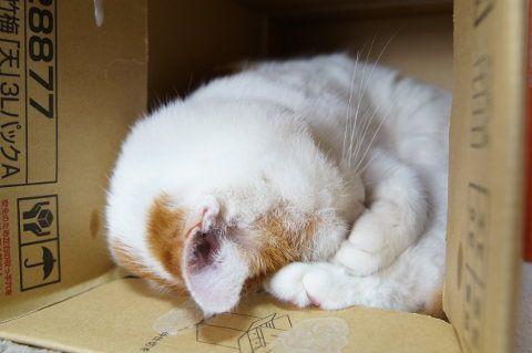 おやすみ - かご猫 Blog