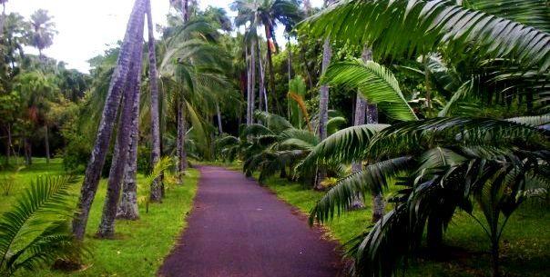 Pamplemousses Botanical Gardens near Port Louis, Mauritius