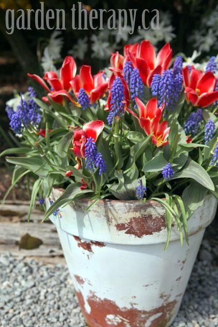 Preparing Fall Bulb Planters for Spring Planters Spring