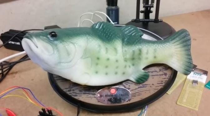 Bukan Berenang, Ikan Ini Jago Tebak Cuaca Terkini! - http://wp.me/p70qx9-6mv