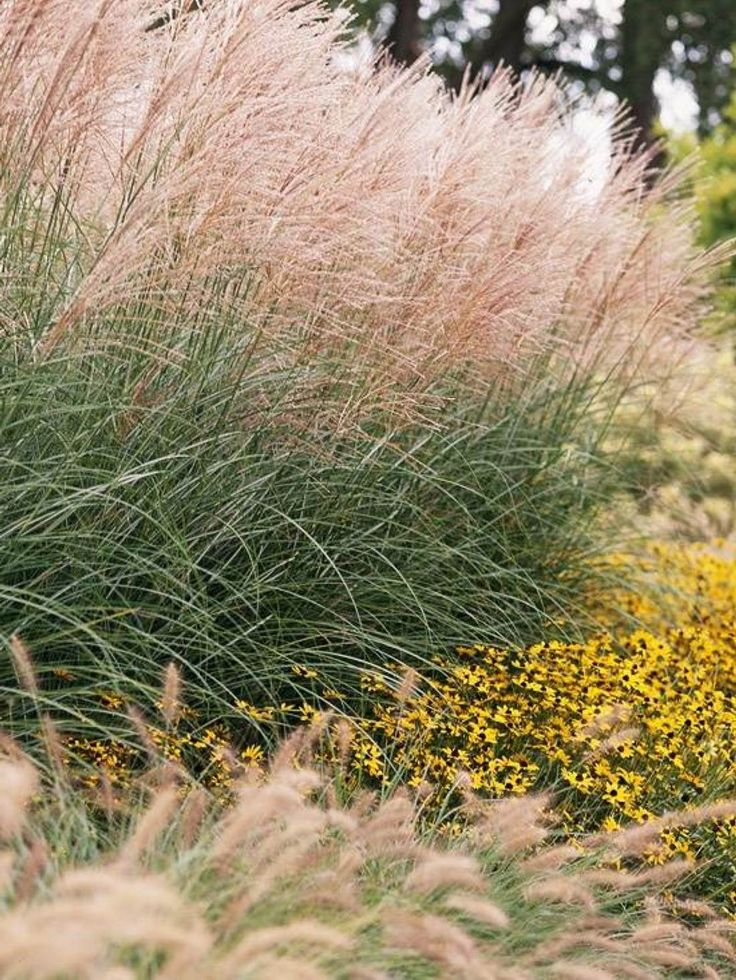 Landscaping With Evergreens And Grasses : Shrubs with delicate white flowers and grasses cover the landscape