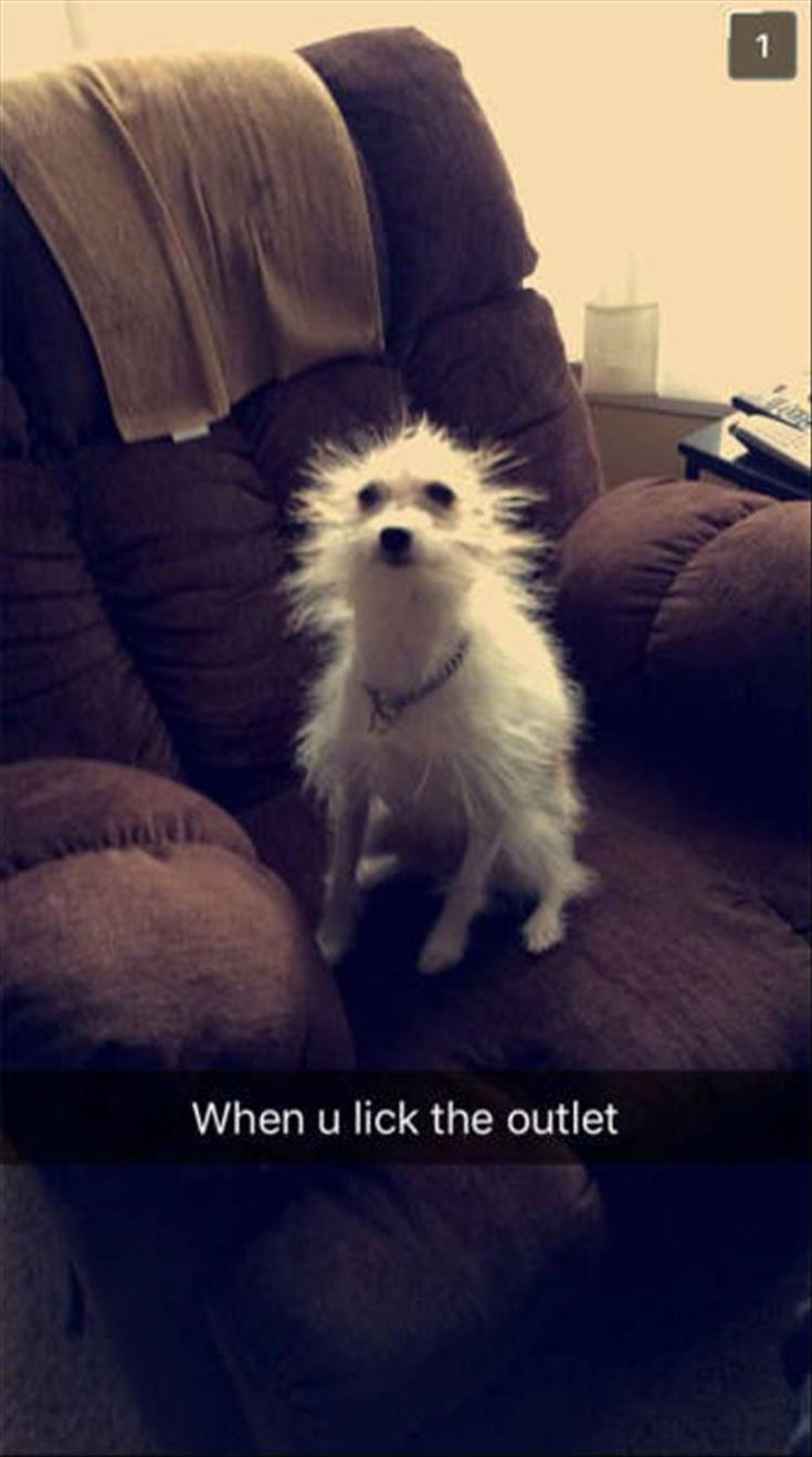 Best Funniest Snapchats Ideas On Pinterest Reddit Funny - 25 of the funniest snapchats ever made