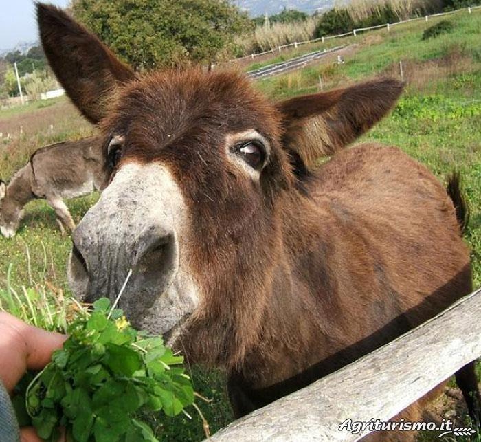 Agriturismo Ca' La Somara situato a Arzachena - Arzachena in provincia di Olbia-Tempio~ yeah so.....donkeys are loved in every language!
