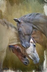 The Beauty of horses