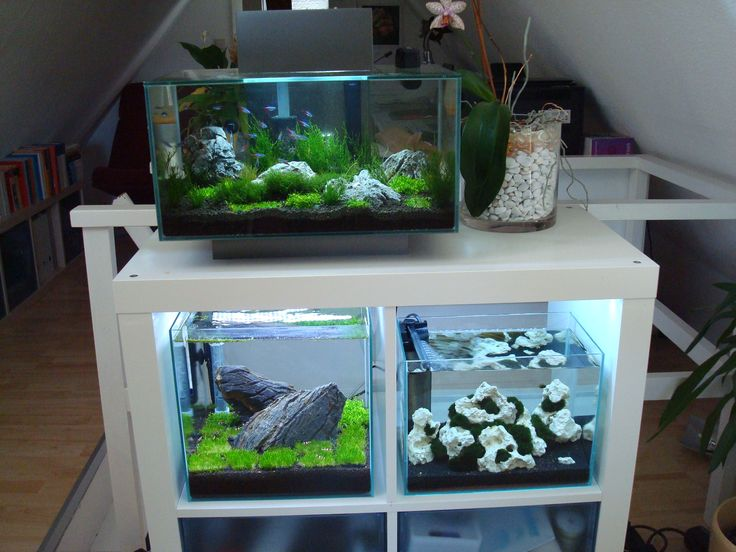 Ikea expedit with aquarium google search 10 gallon for Aquarium boule 20 litres
