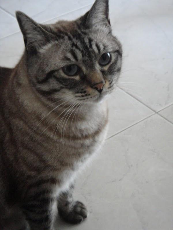 o meu Garfield