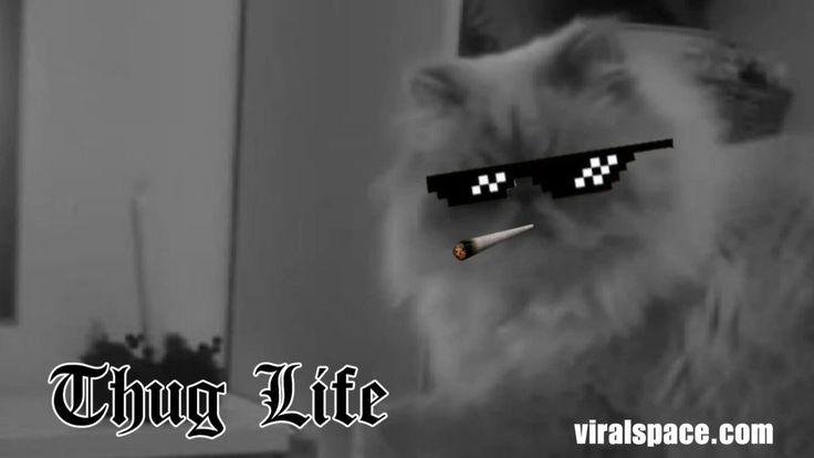 Thug Dog Cat