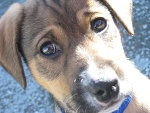 COCCA,my dog..XD by ~LuanaPudda