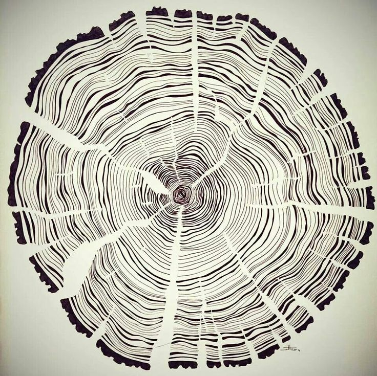 Tree year rings pen and ink illustration on paper by Wouter Haine www.dutch-designs.eu #drawing #ink #paper #tree #rings #nature #freehand #pen #illustration