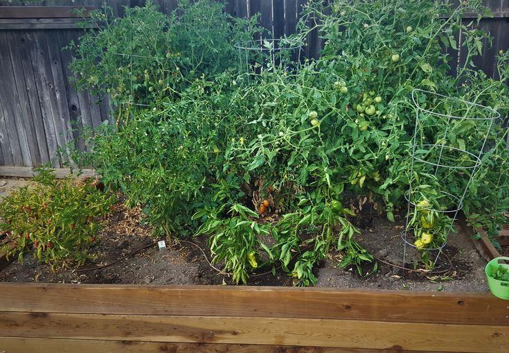 Best 25 Raised Garden Beds Irrigation Ideas On Pinterest
