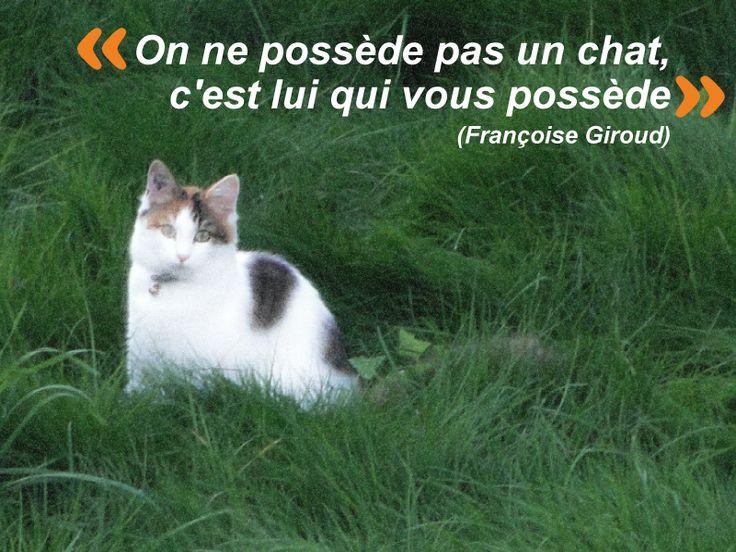 Les 525 meilleures images propos de chats sur pinterest animaux chats et maine coon - Chat qui dort sur son maitre ...