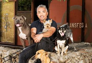 Exclusive Video: Cesar Millan Takes on Stray Mutt in New Series Leader of the Pack - Today's News: Our Take | TVGuide.com