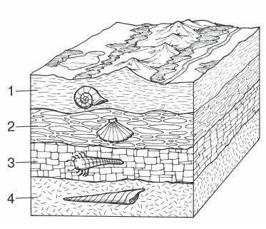 evolution cake  sedimentary layers  geology