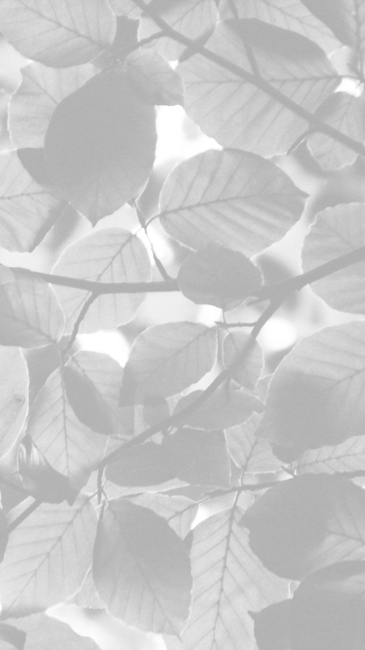 Tree Blossom Nature Leaf Green White Bw #iPhone #6 #plus #wallpaper