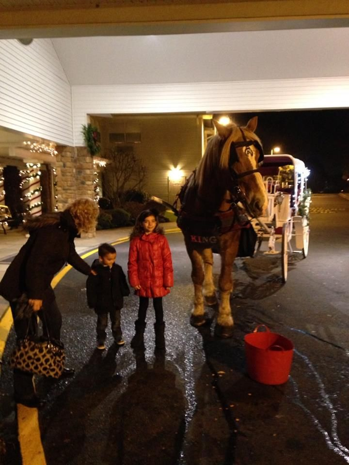 King, one of our huge Belgians at Atria Senior Living Tinton Falls, NJ last night with our Vis a Vis carriage. They were a little disappointed that they didn't get a white horse until they saw how big and gentle he was. Now they only want him for their next event.