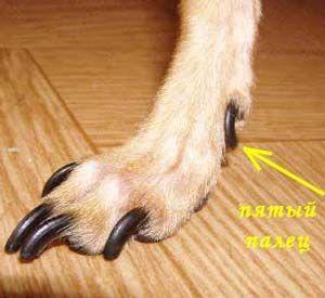 ножницы для стрижки когтей у собак