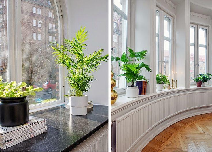 plantas en las repisas