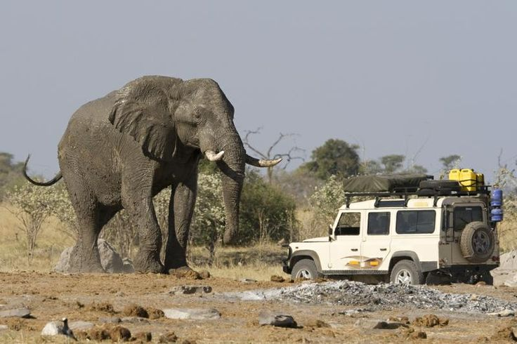 Top 10 African Safari Parks - Bucket List Dream from TripBucket