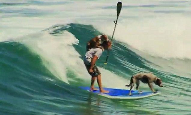 Paddle boarder surfs with his two pet dogs