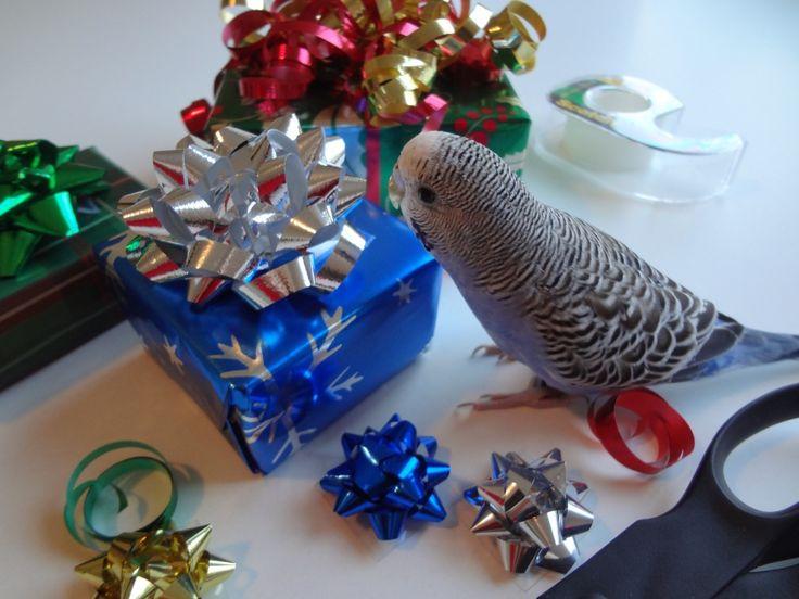 Christmas Gift for budgie