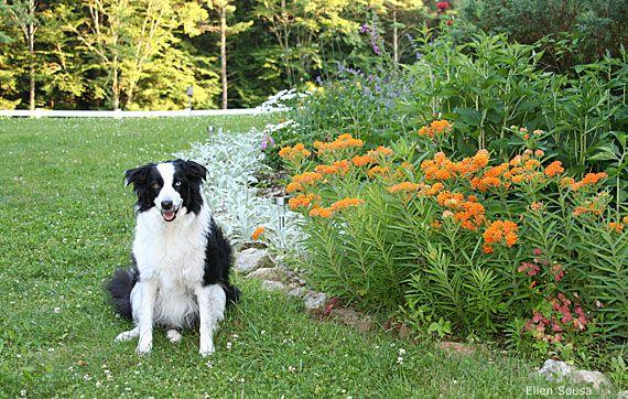 Woodlands Backyard Dog Friendly