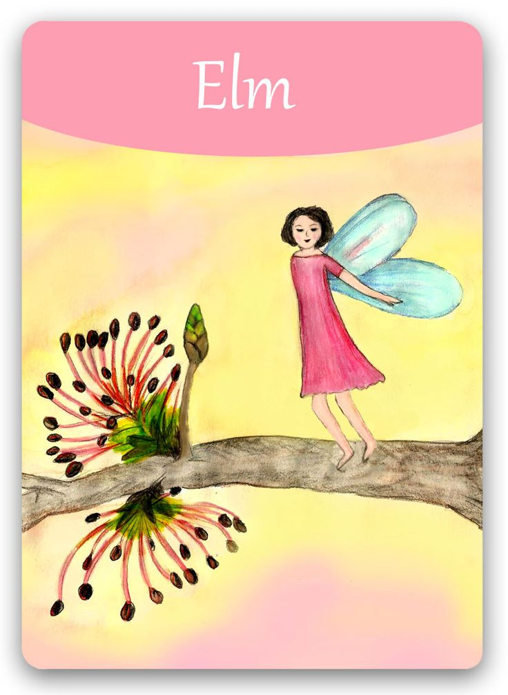 Bach Flower Cards [Elm] - Elm personalities often put aside their own needs for those of the greater good - and this can lead to a state of near breakdown. Once back in balance, those with the Elm personality should take care not to repeat the same activities that put him or her in the negative Elm state to begin with. They should remember to see themselves first as an individual who has responsibilities toward themselves as well as to others.